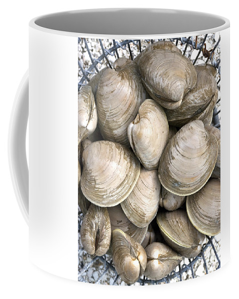 Quahogs Coffee Mug featuring the photograph Barnstable Harbor Quahogs by Charles Harden