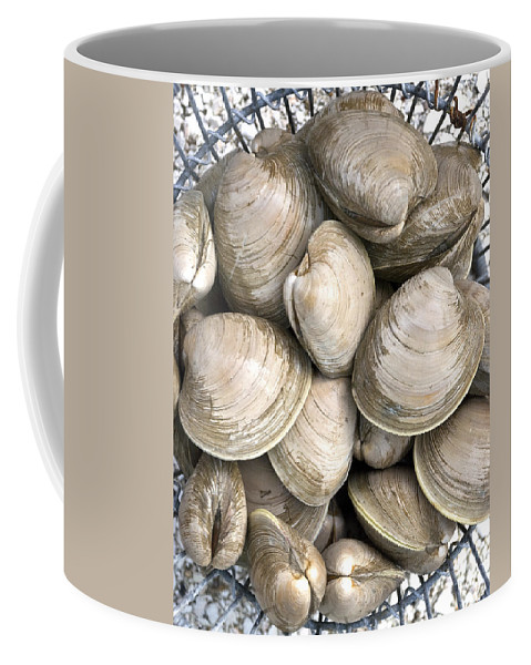 Quahogs Coffee Mug featuring the photograph Quahogs by Charles Harden