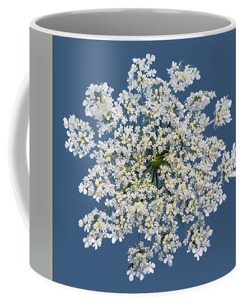 Lise Winne Coffee Mug featuring the photograph Queen Anne's Lace Flower by Lise Winne