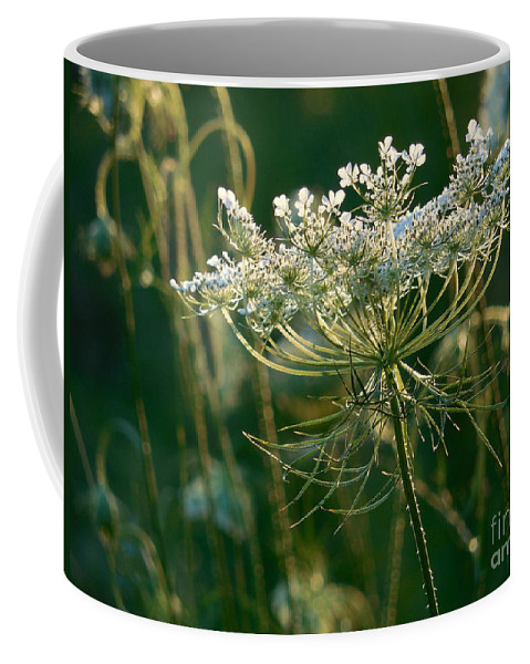 Queen Anne's Lace Coffee Mug featuring the photograph Queen Anne's Lace In Green Horizontal by Rowena Throckmorton