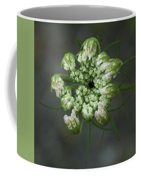 Queen Anne's Lace Coffee Mug featuring the photograph Queen Anne's Lace In Waiting by Tana Reiff