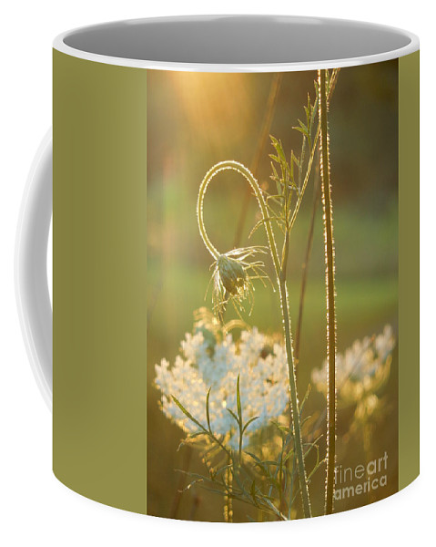Queen Anne's Lace Coffee Mug featuring the photograph Queen Anne's Lace Sunset by Rowena Throckmorton