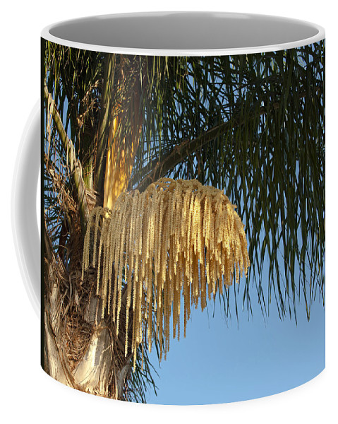 Florida; Royal; Queen; Palm; Tree; Syagrus; Romanzoffiana; Palms; Flower; Flowering; Bloom; Blooming; Summer; Trunk; Leaves; Flowers; Fronds; Everglades; Melbourne; Beach; Brevard; Plant; Plants; Foliage; Ornamental; Grow; Growing; Male; Female Coffee Mug featuring the photograph Queen Palm Tree Flower by Allan Hughes