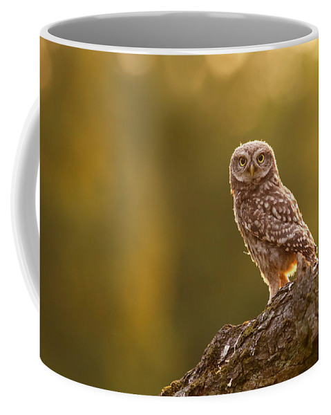 Athene Noctua Coffee Mug featuring the photograph Qui, Moi? Little Owlet In Warm Light by Roeselien Raimond