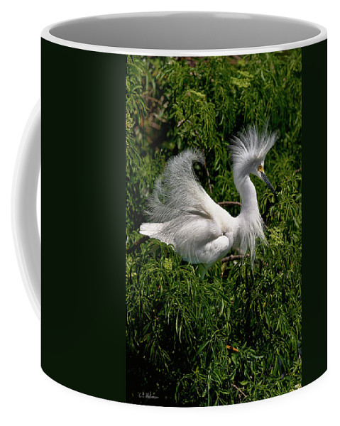 Snowy Egret Coffee Mug featuring the photograph Quite The Doo by Christopher Holmes