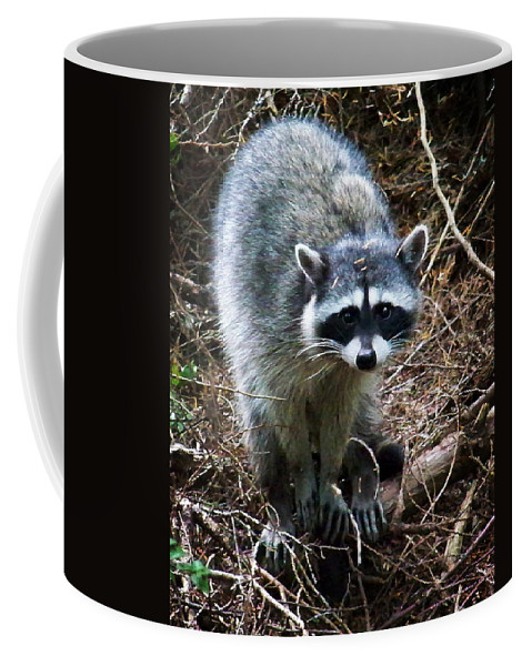 Painting Coffee Mug featuring the photograph Raccoon by Anthony Jones