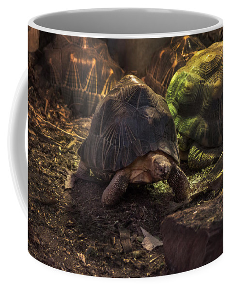 Radiated Tortoise Coffee Mug featuring the photograph Radiated Tortoise by Doc Braham