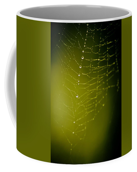 Spider Coffee Mug featuring the photograph Rain Down On Me by Danielle Silveira