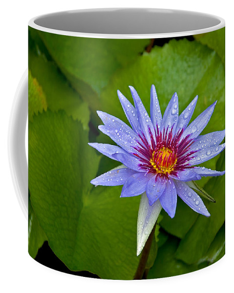 Lotus Coffee Mug featuring the photograph Rain Drenched Blue Lotus In Grand Cayman by Marie Hicks