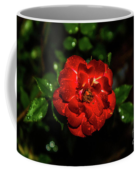 Rain Coffee Mug featuring the photograph Rain Drops On A Rose by Kevin Gladwell