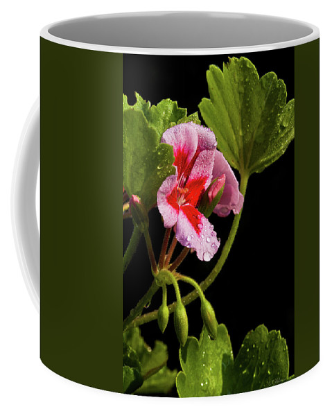 Rain Coffee Mug featuring the photograph Rain Refreshed by Christopher Holmes