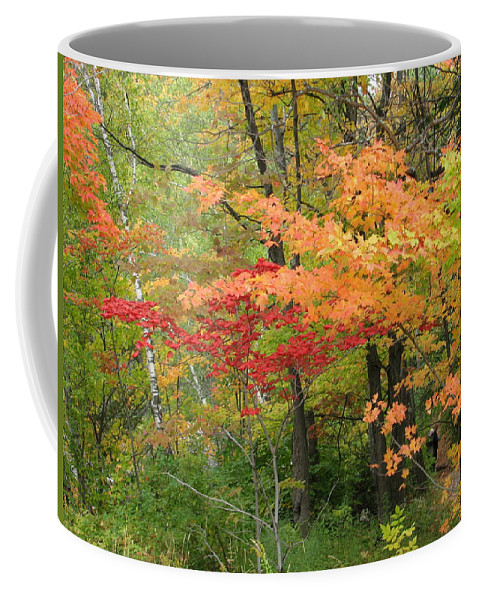 Fall Coffee Mug featuring the photograph Rainbow by Kelly Mezzapelle
