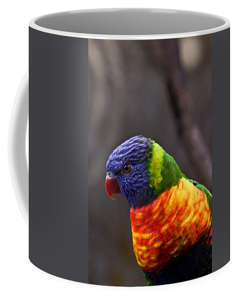 Bird Colorful Coffee Mug featuring the photograph Rainbow Lorikeet by Douglas Barnett