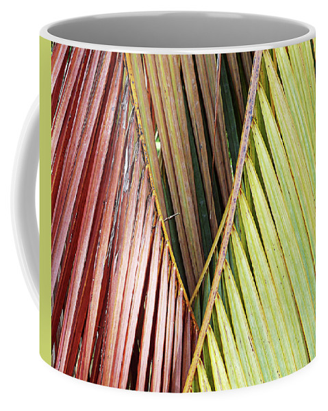 Florida Coffee Mug featuring the photograph Rainbow Of Palms Gp by Chris Andruskiewicz