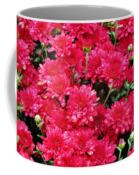 Flowers Coffee Mug featuring the photograph Raindrops by Don Baker