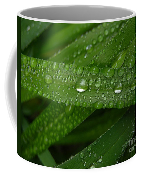 Rain Coffee Mug featuring the photograph Raindrops On Green Leaves by Carol Groenen