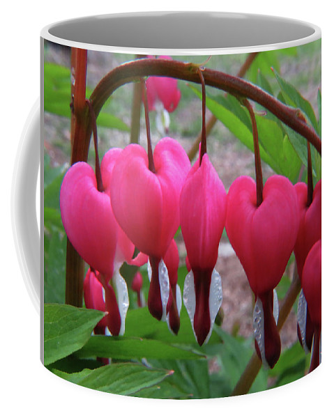 Flowers Coffee Mug featuring the photograph Raindrops On Pink Bleeding Hearts by Richard Griffis