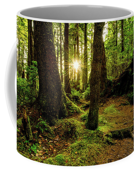 Rainforest Coffee Mug featuring the photograph Rainforest Path by Chad Dutson