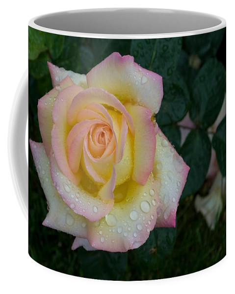 Rose Coffee Mug featuring the photograph Rainy Day Rose by Anella Harmeyer