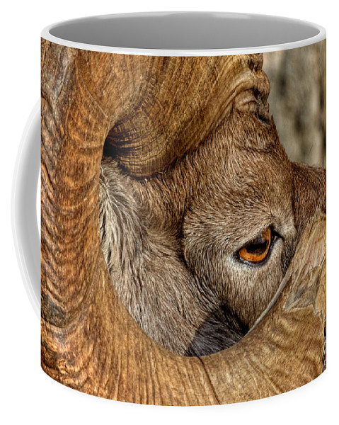 Bighorn Ram Coffee Mug featuring the photograph Ram Detail by James Anderson