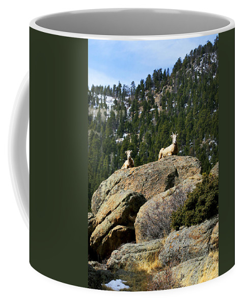 Ram Coffee Mug featuring the photograph Ram On The Watch by Marilyn Hunt