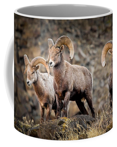 Bighorn Sheep Coffee Mug featuring the photograph Ram Rock Mountain At Dawn by Athena Mckinzie