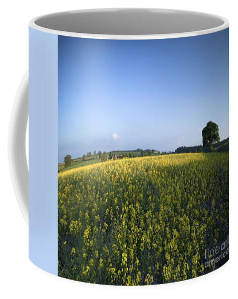 Country Coffee Mug featuring the photograph Rapeseed Blossom by Angel Ciesniarska