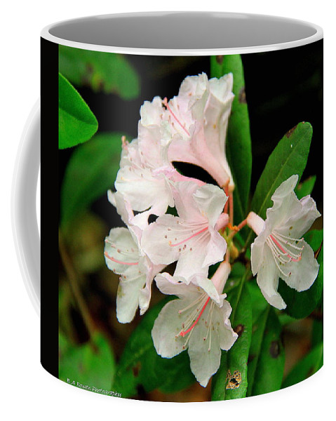 Chapman Rhododendron Coffee Mug featuring the photograph Rare Florida Beauty - Chapmans Rhododendron by Barbara Bowen
