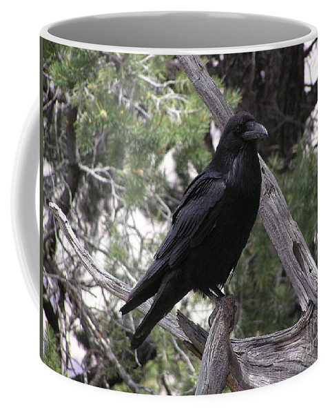 Raven Coffee Mug featuring the photograph Raven by Louise Magno