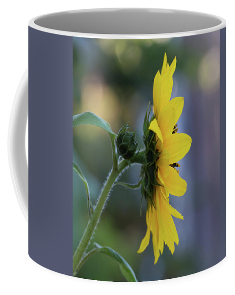 Reaching For The Sun Coffee Mug featuring the photograph Reaching For The Sun by Tran Boelsterli