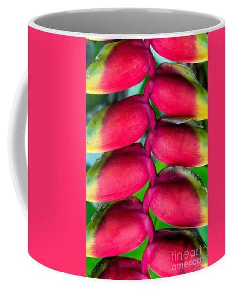 Parrot's Coffee Mug featuring the photograph Parrot's Beak Heliconia by Samantha Glaze