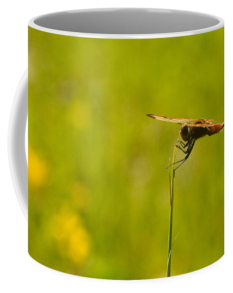 Dragonfly Coffee Mug featuring the photograph Ready For Flight by Douglas Barnett