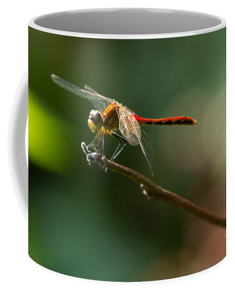 Insects Coffee Mug featuring the photograph Ready For Flight by Frank Pietlock