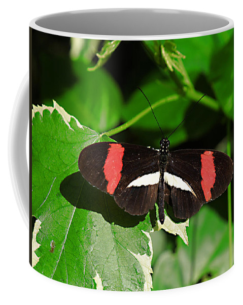 Bug Coffee Mug featuring the photograph Ready For Take Off by Bob Johnson