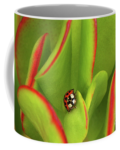 Red Coffee Mug featuring the photograph Ready For Take Off by Manuel Balesteri