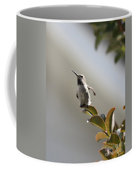 Hummingbird Coffee Mug featuring the photograph Ready For Takeoff by Carol Groenen