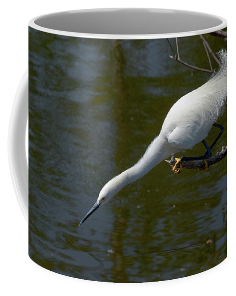 Snowy Egret Coffee Mug featuring the photograph Ready..set.. by Christopher Holmes