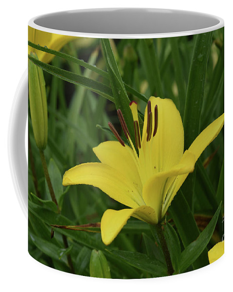Lily Coffee Mug featuring the photograph Really Beautiful Yellow Lily Growing In Nature by DejaVu Designs