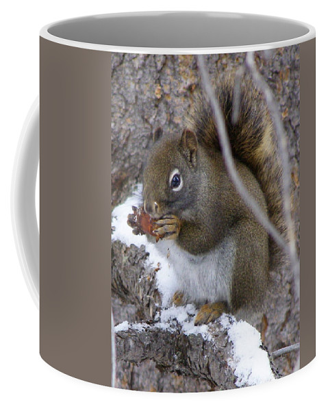 Squirrel Coffee Mug featuring the photograph Reaping What We Sow by DeeLon Merritt