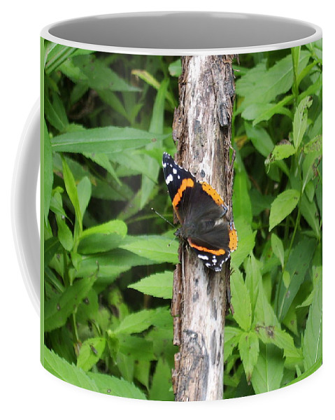 Red Admiral Butterfly Images Red Admiral Butterfly Photograph Prints American Butterflies Entomology Forest Ecosystem Forest Habitat Nature Biodiversity Butterfly Species Orange And Black Butterfly Images Pictures Coffee Mug featuring the photograph Red Admiral Butterfly by Joshua Bales