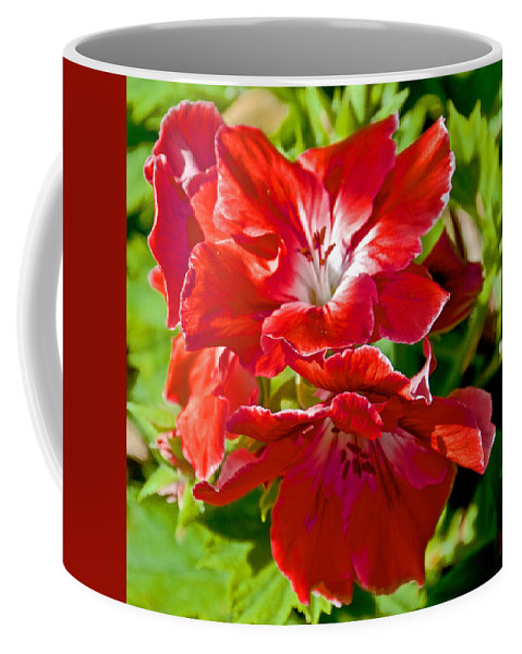 Red Amaryllis At Pilgrim Place In Claremont Coffee Mug featuring the photograph Red Amaryllis At Pilgrim Place In Claremont-california by Ruth Hager