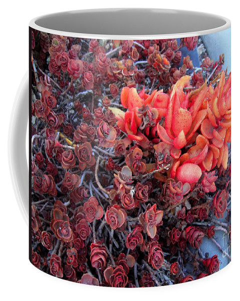 Succulent Coffee Mug featuring the photograph Red And Burgundy Succulent Plants by Sofia Metal Queen