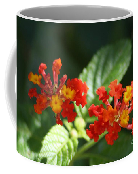 Red Coffee Mug featuring the photograph Red And Orange Lantana by John W Smith III