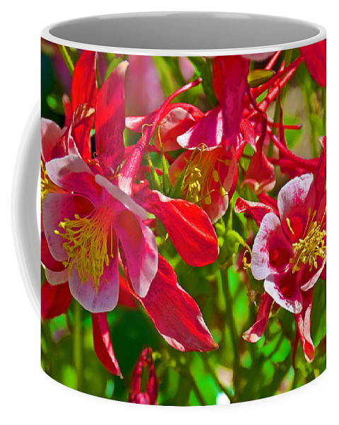 Red And White Columbine At Pilgrim Place In Claremont Coffee Mug featuring the photograph Red And White Columbine At Pilgrim Place In Claremont-california by Ruth Hager