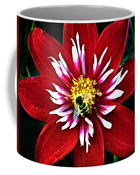 Flower Coffee Mug featuring the photograph Red And White Flower With Bee by Anthony Jones