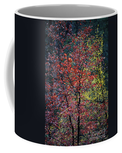 Landscape Coffee Mug featuring the photograph Red And Yellow Leaves Abstract Vertical Number 1 by Heather Kirk