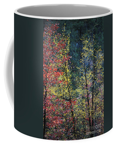 Landscape Coffee Mug featuring the photograph Red And Yellow Leaves Abstract Vertical Number 2 by Heather Kirk