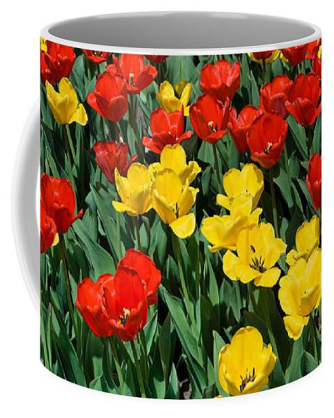 Red Coffee Mug featuring the photograph Red And Yellow Tulips Naperville Illinois by Michael Bessler