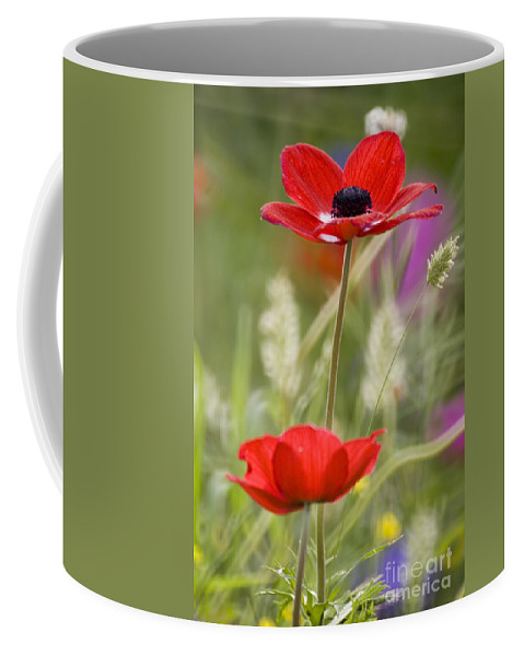 Red Coffee Mug featuring the photograph Red Anemone Coronaria In Nature by Ofer Zilberstein