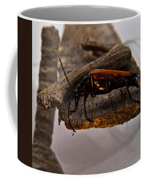 Beetle Coffee Mug featuring the photograph Red Beetle At Twlight by Douglas Barnett